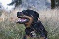 犬の肝臓の数値に問…の画像