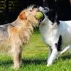 犬が誤飲してしまう…の画像