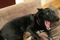 犬の驚くべき身体能…の画像