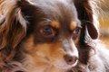ミックス犬の種類!…の画像