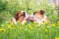 犬にも恋愛感情があ…の画像