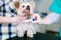 愛犬の健康管理のた…の画像