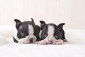 1番可愛い子犬時代…の画像