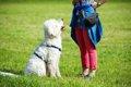 パブロフの犬とは?…の画像