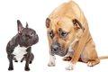 怖がり癖のある犬と…の画像