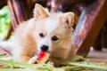 犬に与えて良い果物…の画像