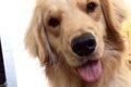 犬が覚えられる言葉…の画像