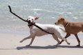 犬に冷房を使う理由…の画像