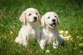 「改正動物愛護法」…の画像