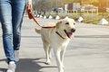 犬が散歩中に飼い主…の画像