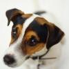 愛犬が四六時中体を…の画像