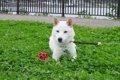 遊びの途中で愛犬の…の画像