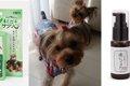 犬のデンタルケア!…の画像