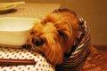 愛犬の口臭&体臭対…の画像