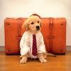 愛犬との旅行で絶対…の画像