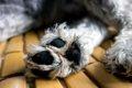 犬の肉球の色が変わ…の画像