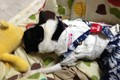 【体験談】愛犬がお…の画像