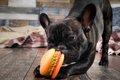 犬に一人遊びさせる…の画像