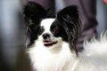 犬が骨折したときの…の画像