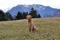 愛犬を連れて登山に…の画像