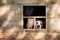 愛犬がケージから出…の画像