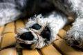 気をつけて!犬の散…の画像