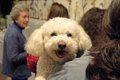 愛犬を社交的なワン…の画像