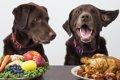 犬に必要な『5つの…の画像