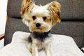 愛犬を静電気から守…の画像