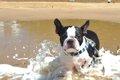 愛犬と一緒に海水浴…の画像