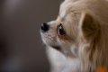 犬の突然死についての画像