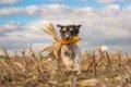 穀物が犬に与える効…の画像