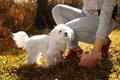 愛犬がお散歩中にし…の画像