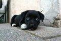 犬が白目を向く「ク…の画像