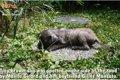 捨てられていた仔犬…の画像