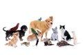 犬と相性の良い動物…の画像