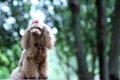 愛犬に音楽を聴かせ…の画像