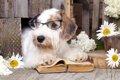 使い終わった犬用品…の画像