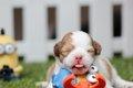 愛犬の自宅出産に必…の画像