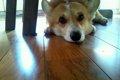 犬の健康診断!自宅…の画像