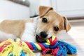 犬の最新おもちゃ4選の画像
