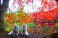 愛犬と秋の軽井沢、…の画像