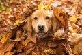季節ごとに見る犬の…の画像