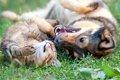 犬と猫の性格の違い…の画像