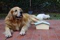 犬にハウスをしつけ…の画像