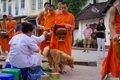 東南アジアの野良犬…の画像