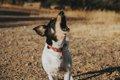 犬は吠え方を使い分…の画像