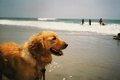 愛犬にたくさん言っ…の画像
