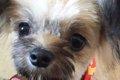 愛犬の寿ちゃんが初…の画像