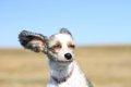 強風の日に犬の散歩…の画像